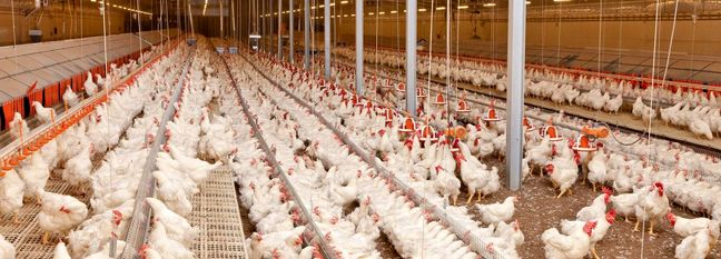 Iran Moves to Minimize Damage From Avian Flu