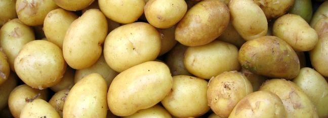 Duty-Free Potato Exports Authorized