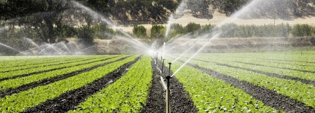 Agro Sector Gobbles Up 91% of Water
