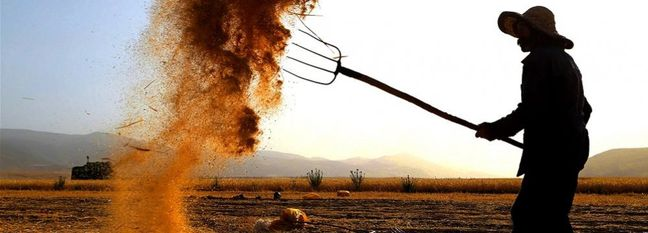 Agricultural Production Meets 85% of Iran's Domestic Demand