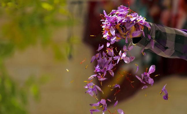 Iran Saffron Exports at Record High