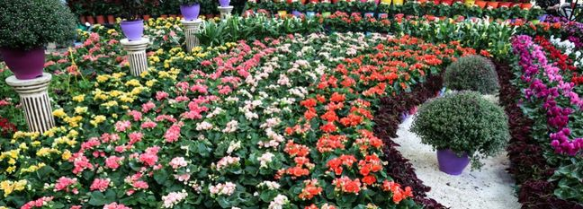 Plant, Flower Exports Earn $40m