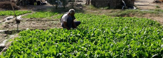 Vegetable Exports at $1.4b Last Year