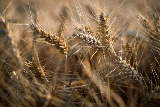 FAO: World Food Supply Under Threat Due to Loss of Biodiversity