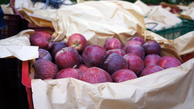 Philippines Testing Iranian Apples for Import