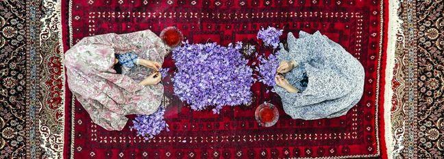 Iran's Q1-3 Saffron Exports Earn $200m