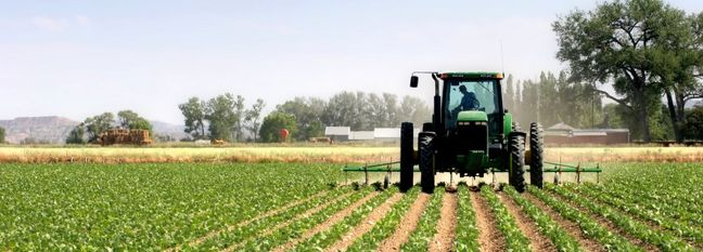 Iran Agrifood Exports Up 15.3%, Imports Down 4.9 Percent
