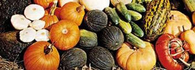 Iran Tops List of Mideast Cucurbit Exporters