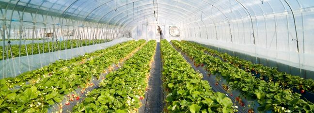 Greenhouse Expansion on Track in Iran