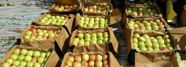 Apple Production Expected to Rise