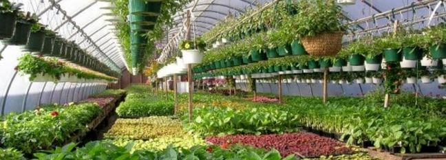 Floriculture Sector Eligible for Virus Bailout